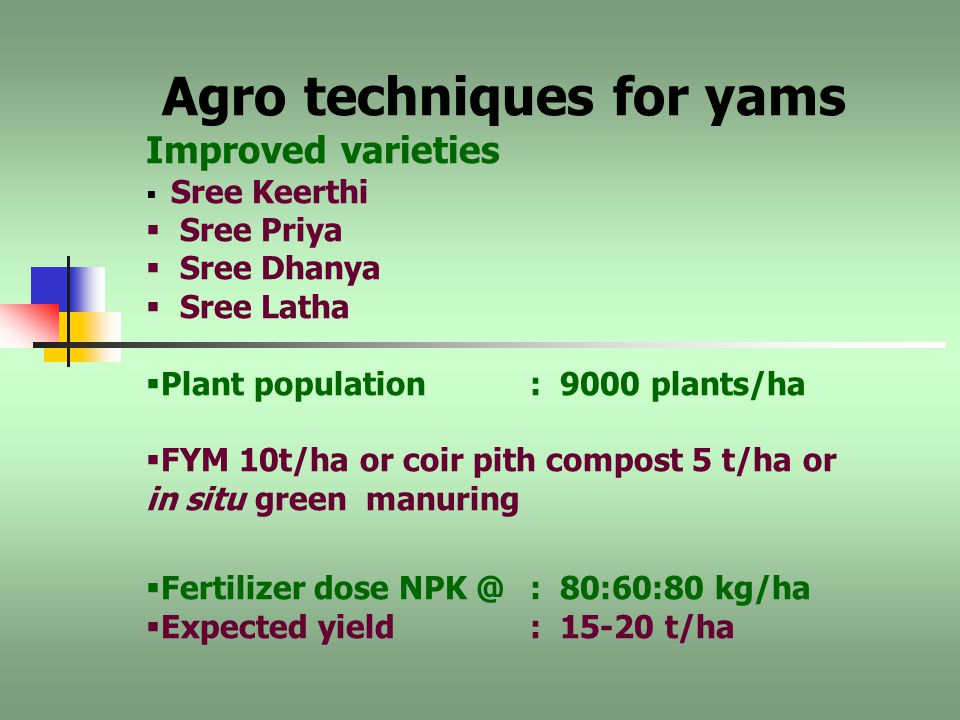 Tropical tubers recommended as intercrops  Cassava  Yams