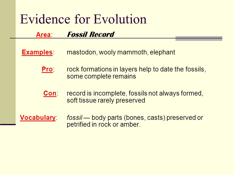 Dating the fossil record activity