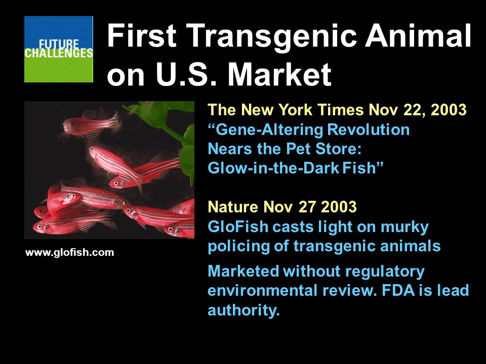The New York Times Nov 22, 2003 Gene-Altering Revolution Nears the Pet Store: Glow-in-the-Dark Fish Nature Nov GloFish casts light on murky policing of transgenic animals Marketed without regulatory environmental review.