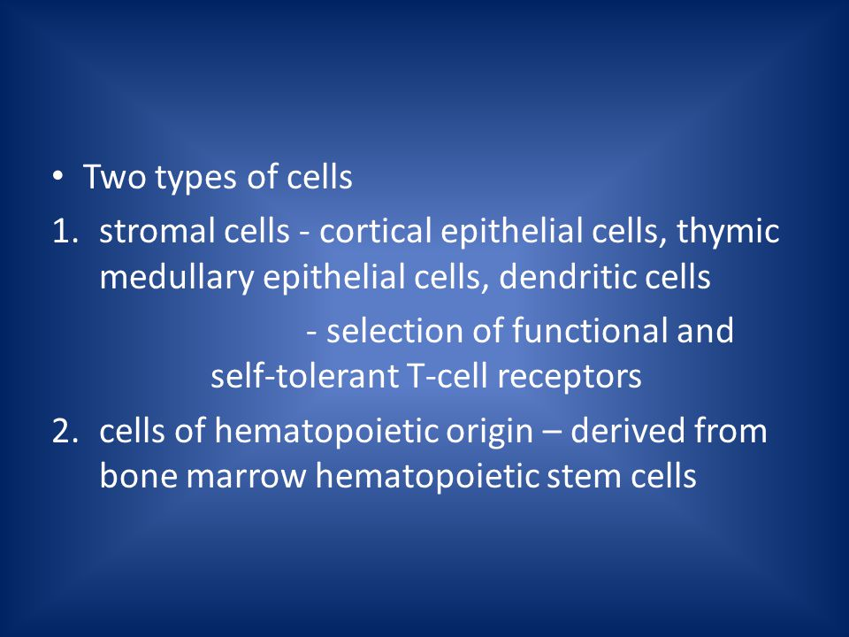 Two types of cells 1.stromal cells - cortical epithelial cells, thymic medullary epithelial cells, dendritic cells - selection of functional and self-tolerant T-cell receptors 2.cells of hematopoietic origin – derived from bone marrow hematopoietic stem cells