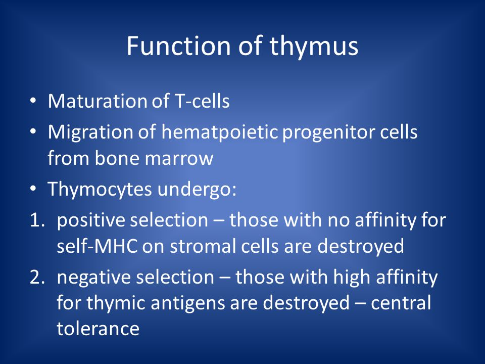 Function of thymus Maturation of T-cells Migration of hematpoietic progenitor cells from bone marrow Thymocytes undergo: 1.positive selection – those with no affinity for self-MHC on stromal cells are destroyed 2.negative selection – those with high affinity for thymic antigens are destroyed – central tolerance