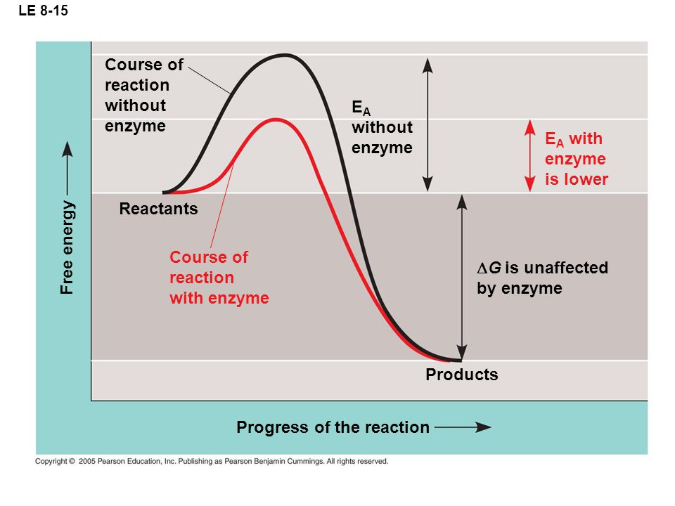 LE 8-15 Course of reaction without enzyme E A without enzyme  G is unaffected by enzyme Progress of the reaction Free energy E A with enzyme is lower Course of reaction with enzyme Reactants Products