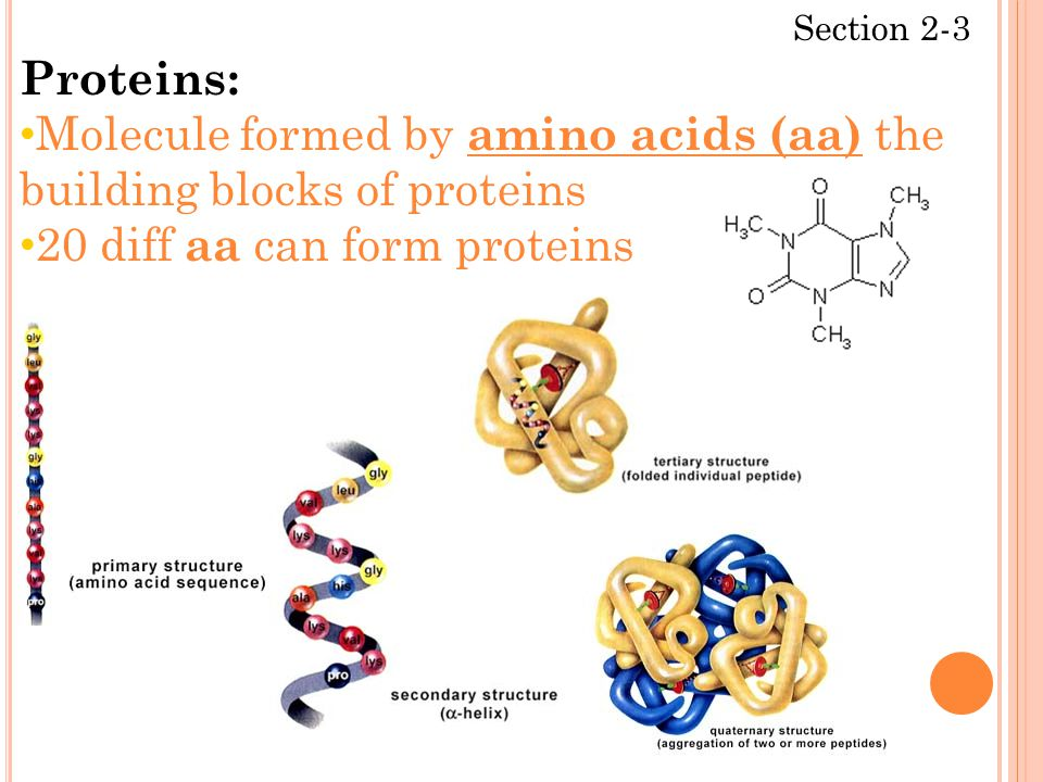 Section 2-3 Proteins: Molecule formed by amino acids (aa) the building blocks of proteins 20 diff aa can form proteins