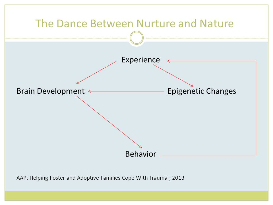 The Dance Between Nurture and Nature Experience Brain Development Epigenetic Changes Behavior AAP: Helping Foster and Adoptive Families Cope With Trauma ; 2013