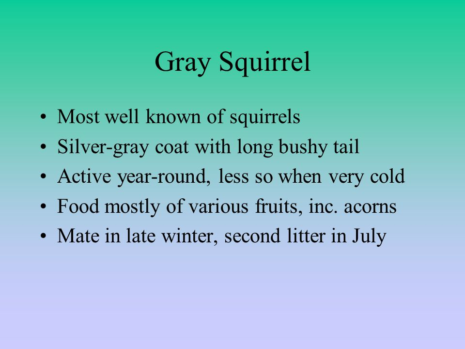 Gray Squirrel Most well known of squirrels Silver-gray coat with long bushy tail Active year-round, less so when very cold Food mostly of various fruits, inc.