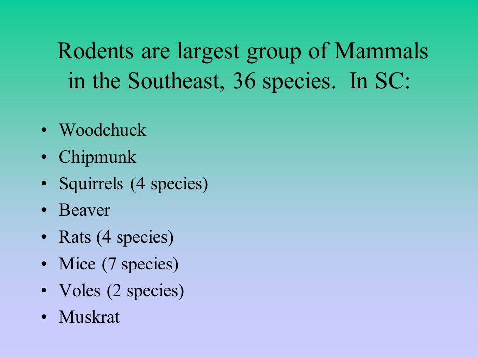 Rodents are largest group of Mammals in the Southeast, 36 species.