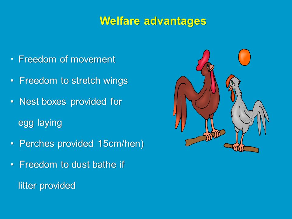 Poultry Husbandry Egg production systems  History of the laying hen
