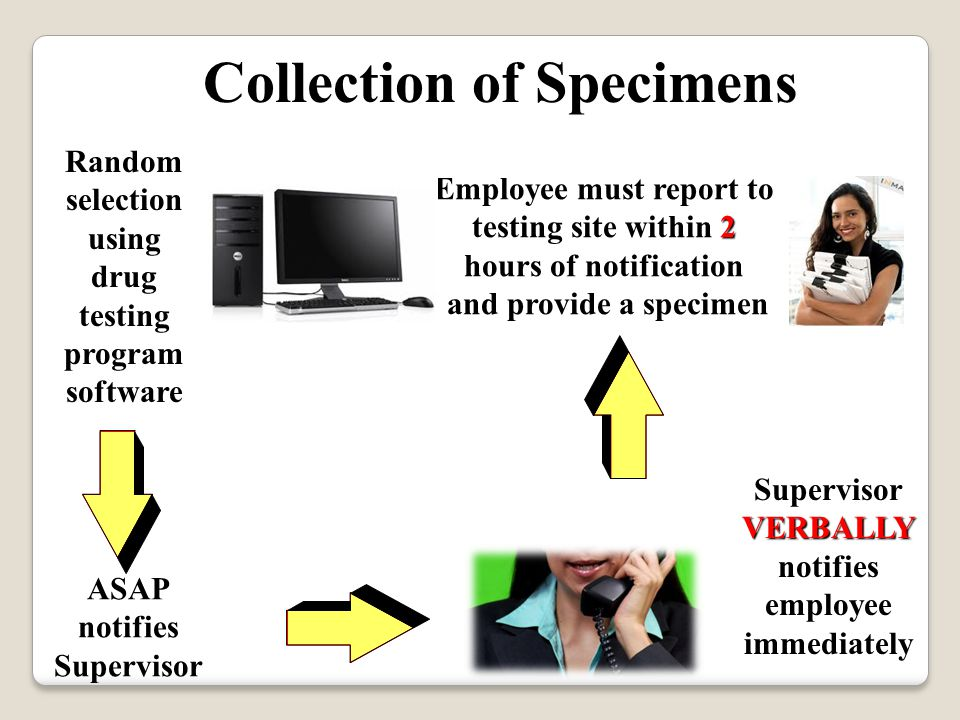 Collection of Specimens Random selection using drug testing program software ASAP notifies Supervisor VERBALLY Supervisor VERBALLY notifies employee immediately 2 Employee must report to testing site within 2 hours of notification and provide a specimen