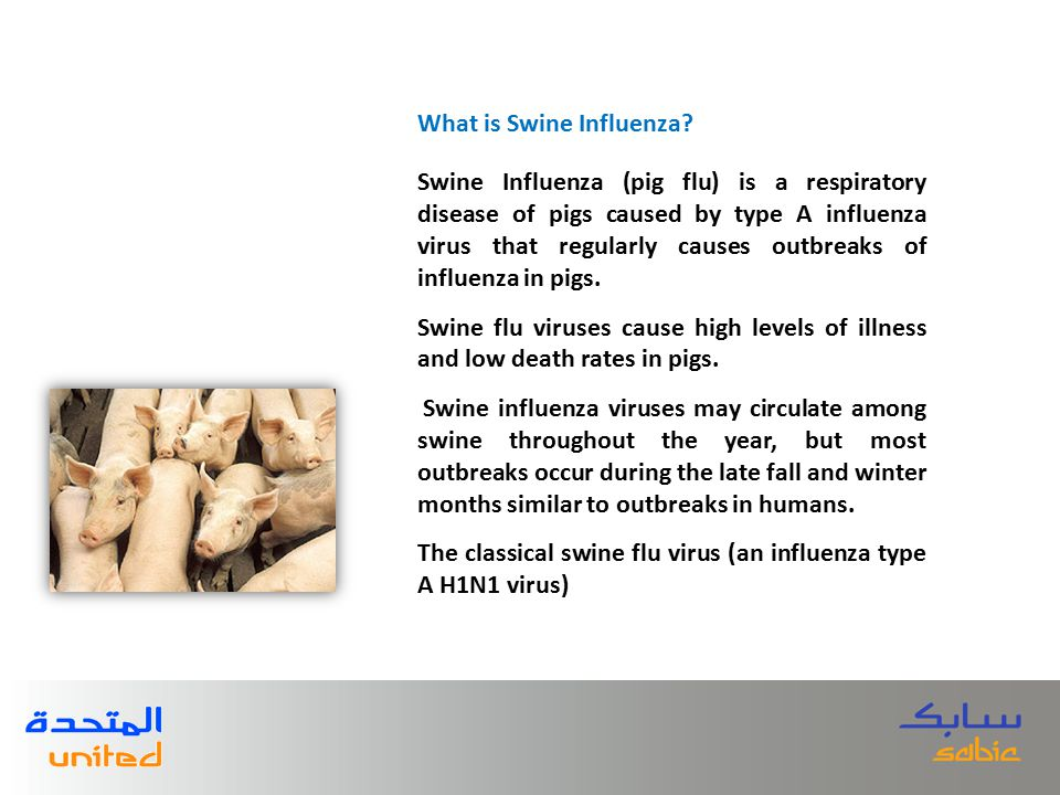 Swine Influenza (pig flu) is a respiratory disease of pigs caused by type A influenza virus that regularly causes outbreaks of influenza in pigs.