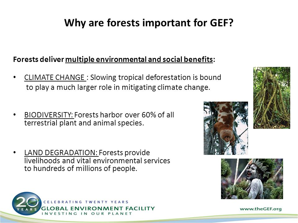 Why are forests important for GEF.