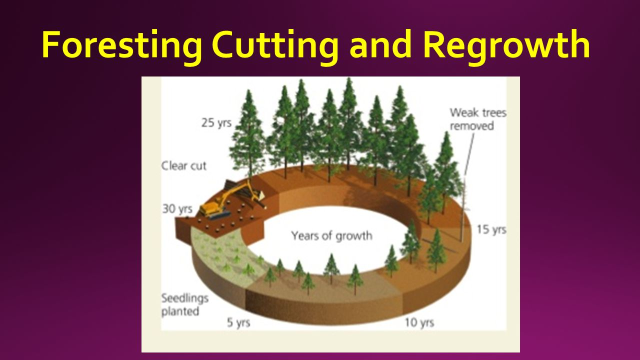 Foresting Cutting and Regrowth