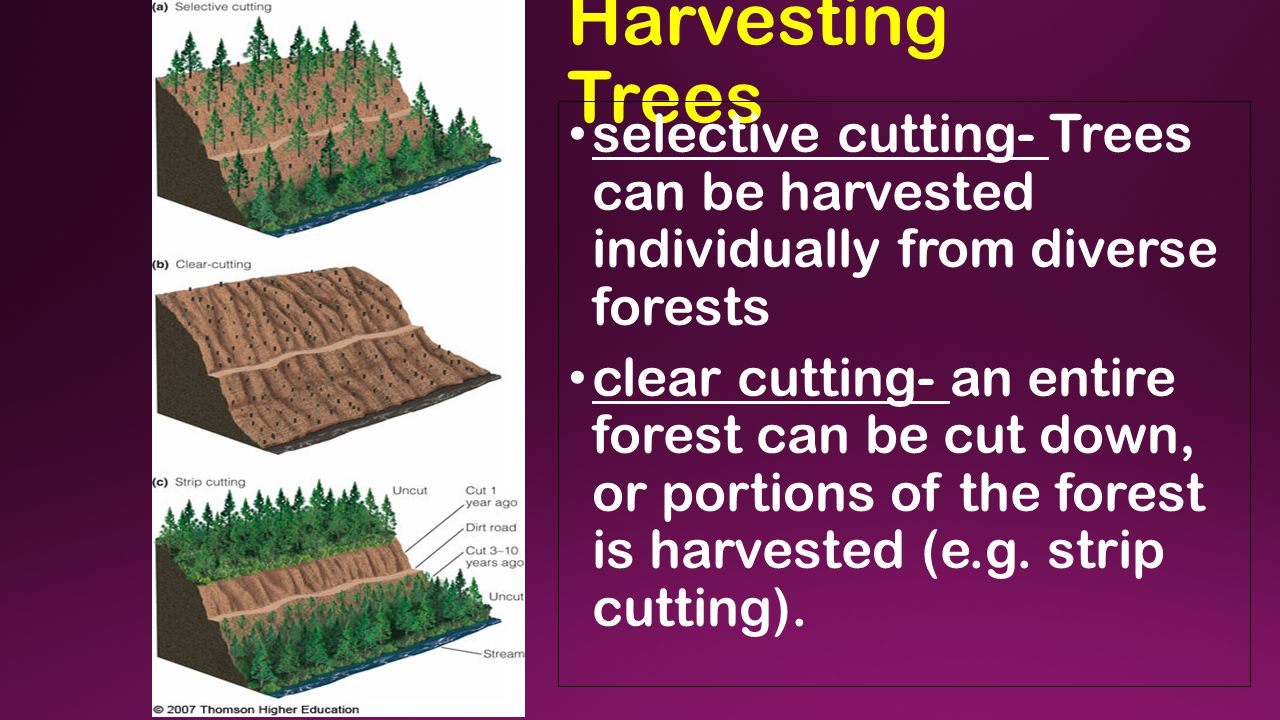 Harvesting Trees selective cutting- Trees can be harvested individually from diverse forests clear cutting- an entire forest can be cut down, or portions of the forest is harvested (e.g.