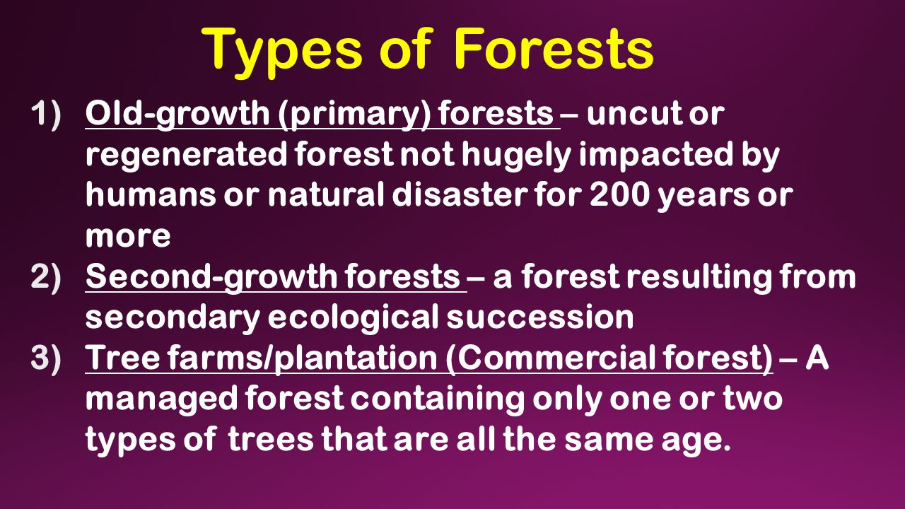Types of Forests 1)Old-growth (primary) forests – uncut or regenerated forest not hugely impacted by humans or natural disaster for 200 years or more 2)Second-growth forests – a forest resulting from secondary ecological succession 3)Tree farms/plantation (Commercial forest) – A managed forest containing only one or two types of trees that are all the same age.