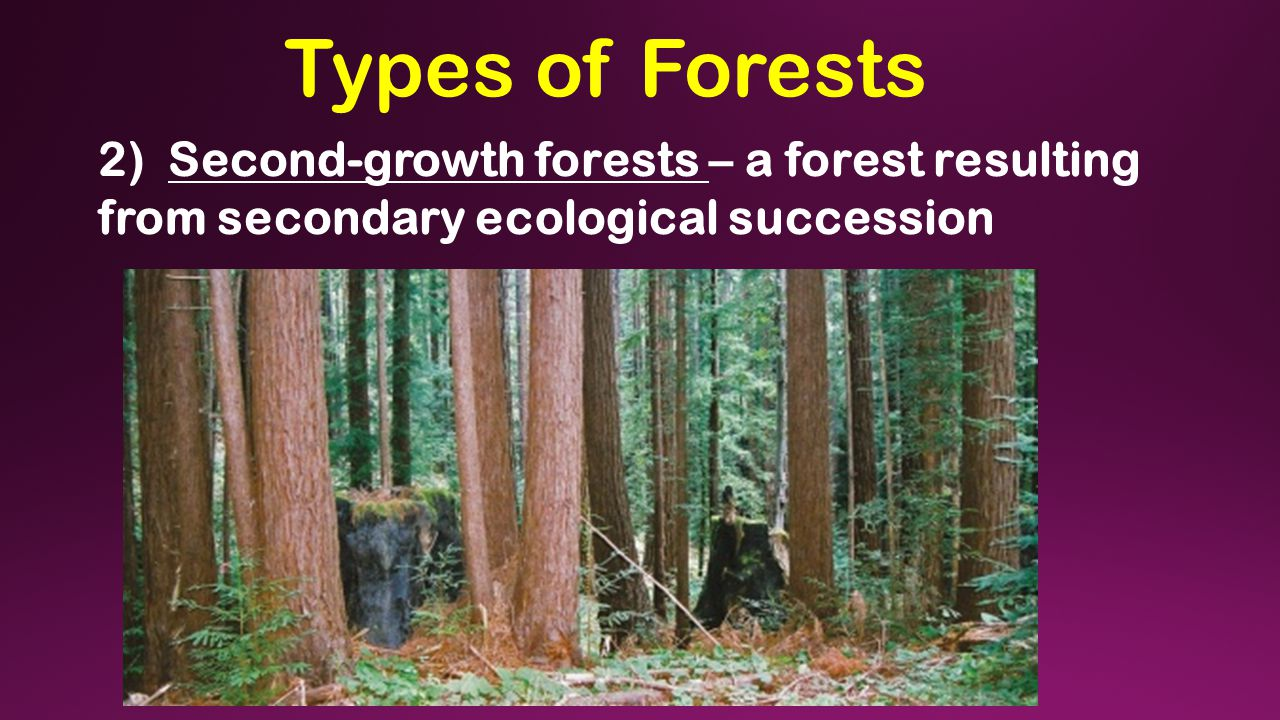 Types of Forests 2) Second-growth forests – a forest resulting from secondary ecological succession
