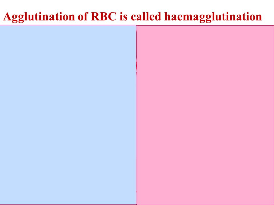 Agglutination of RBC is called haemagglutination Insert a picture