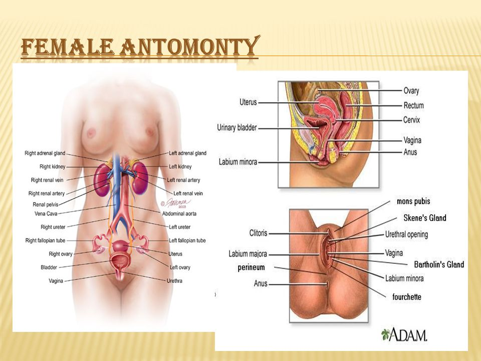 Refers To Health Issues Specific To Human Female Anatomy Often