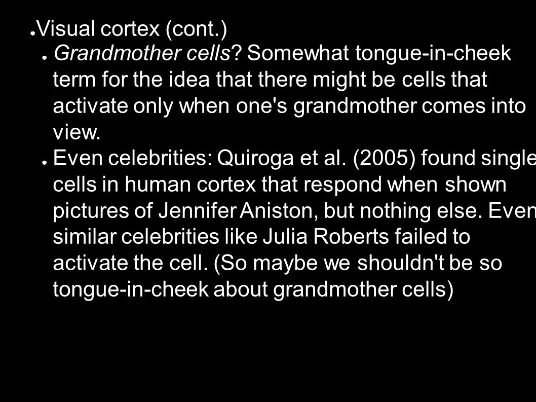 ● Visual cortex (cont.) ● Grandmother cells.