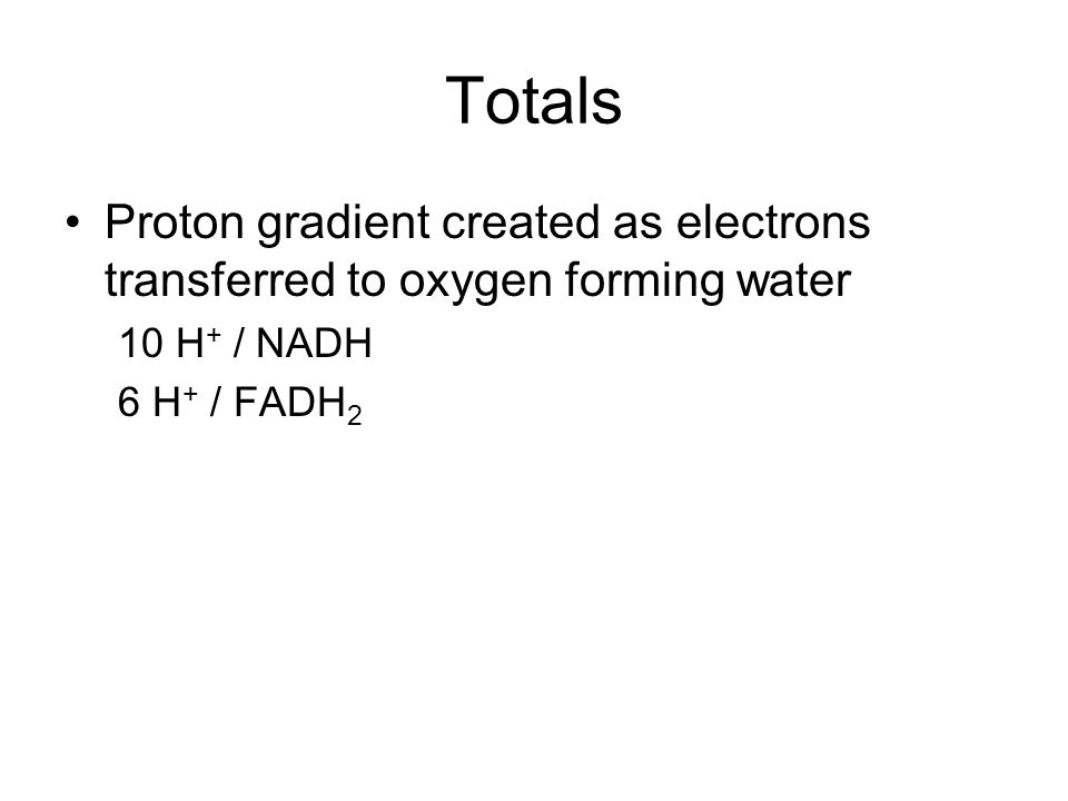 Totals Proton gradient created as electrons transferred to oxygen forming water 10 H + / NADH 6 H + / FADH 2