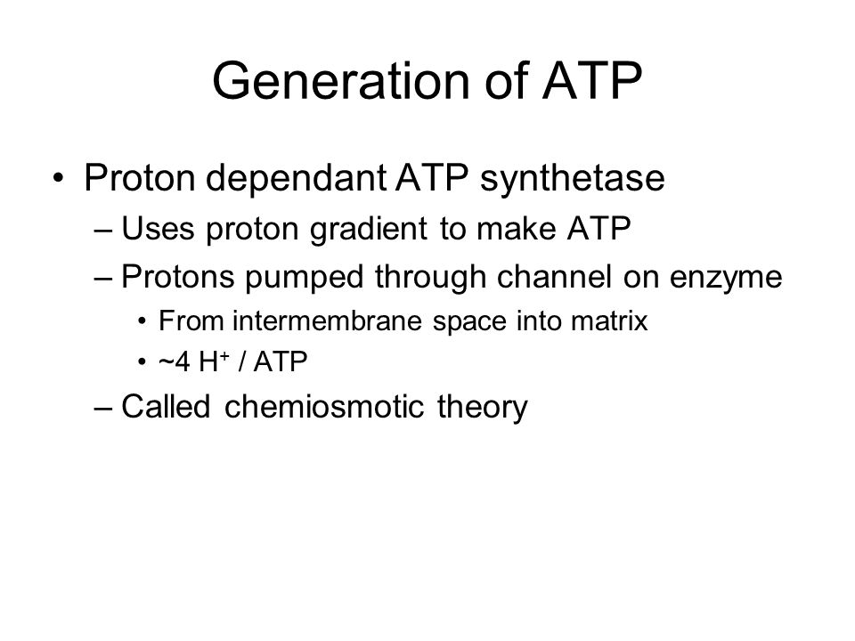 Generation of ATP Proton dependant ATP synthetase –Uses proton gradient to make ATP –Protons pumped through channel on enzyme From intermembrane space into matrix ~4 H + / ATP –Called chemiosmotic theory