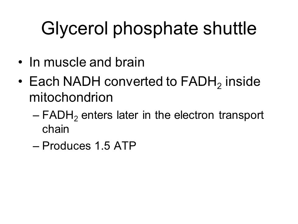 Glycerol phosphate shuttle In muscle and brain Each NADH converted to FADH 2 inside mitochondrion –FADH 2 enters later in the electron transport chain –Produces 1.5 ATP