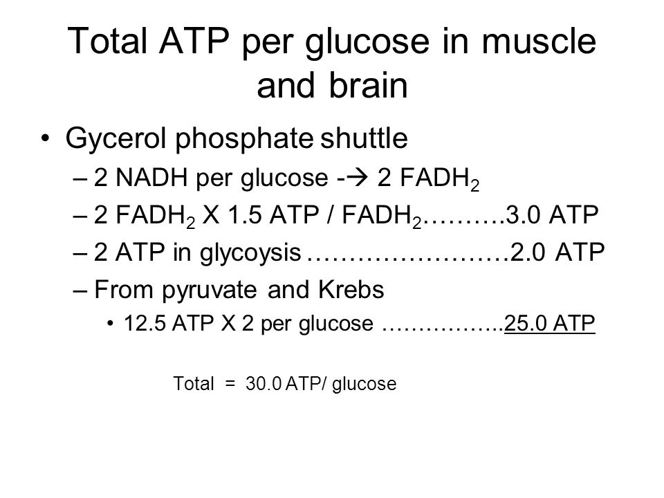 Total ATP per glucose in muscle and brain Gycerol phosphate shuttle –2 NADH per glucose -  2 FADH 2 –2 FADH 2 X 1.5 ATP / FADH 2 ……….3.0 ATP –2 ATP in glycoysis……………………2.0 ATP –From pyruvate and Krebs 12.5 ATP X 2 per glucose …………… ATP Total = 30.0 ATP/ glucose