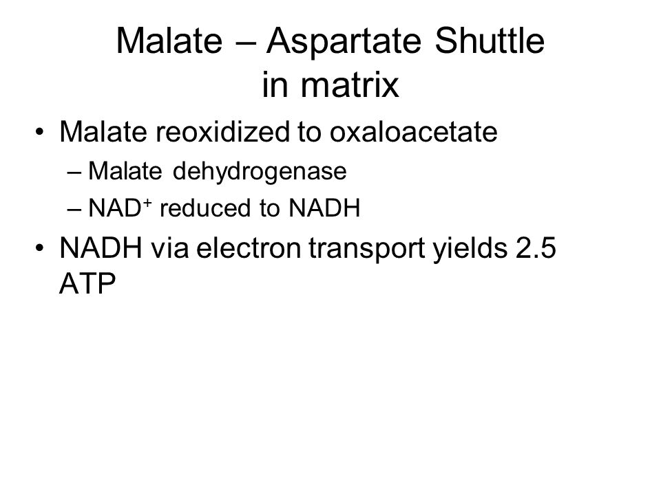 Malate – Aspartate Shuttle in matrix Malate reoxidized to oxaloacetate –Malate dehydrogenase –NAD + reduced to NADH NADH via electron transport yields 2.5 ATP Mlate – Aspartate Shuttle in cytosol