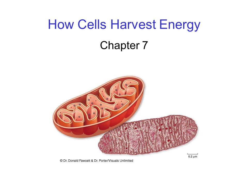 How Cells Harvest Energy Chapter 7