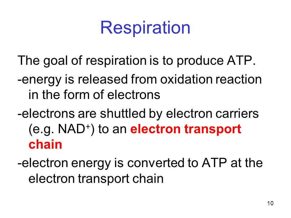 10 Respiration The goal of respiration is to produce ATP.