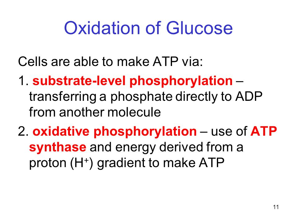 11 Oxidation of Glucose Cells are able to make ATP via: 1.