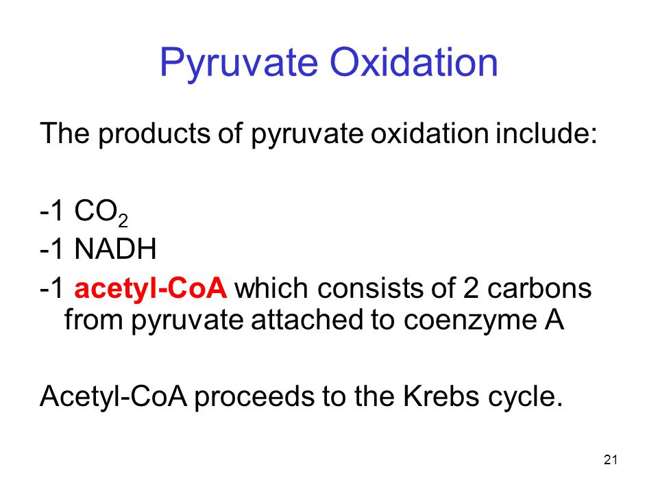 21 Pyruvate Oxidation The products of pyruvate oxidation include: -1 CO 2 -1 NADH -1 acetyl-CoA which consists of 2 carbons from pyruvate attached to coenzyme A Acetyl-CoA proceeds to the Krebs cycle.