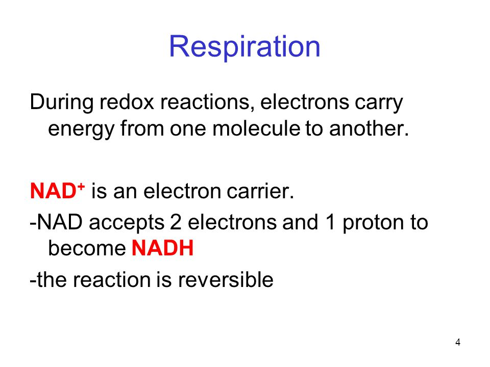 4 Respiration During redox reactions, electrons carry energy from one molecule to another.