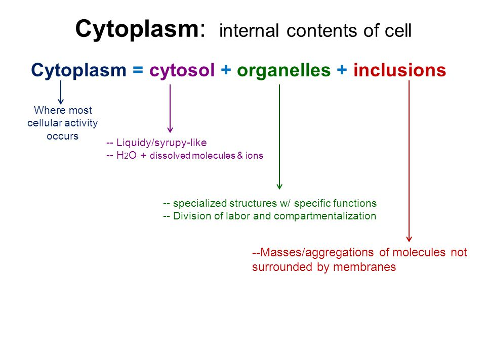 Cell Structure And Function Part 2 Cytoplasm And Organelles Ppt