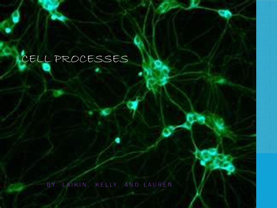 CELL PROCESSES BY: LAIKIN, KELLY, AND LAUREN