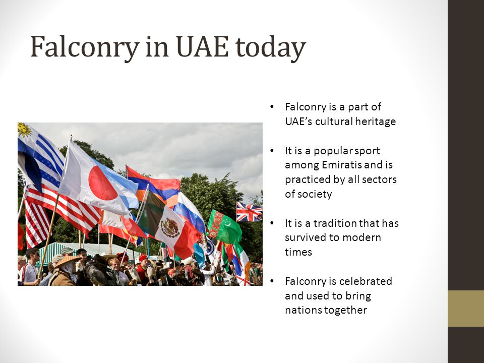 Falconry In The United Arab Emirates School Links Programme Ppt
