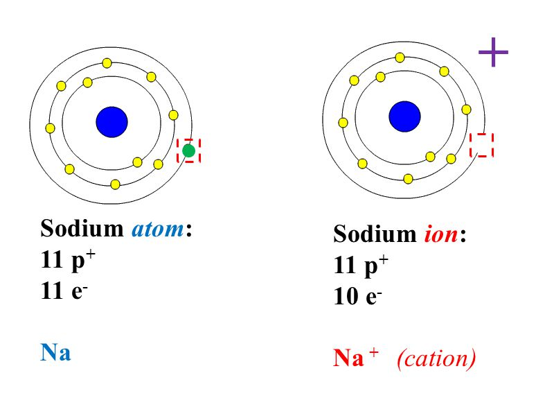 Diagram Of Bohr Model Calcium Download Wiring Diagrams