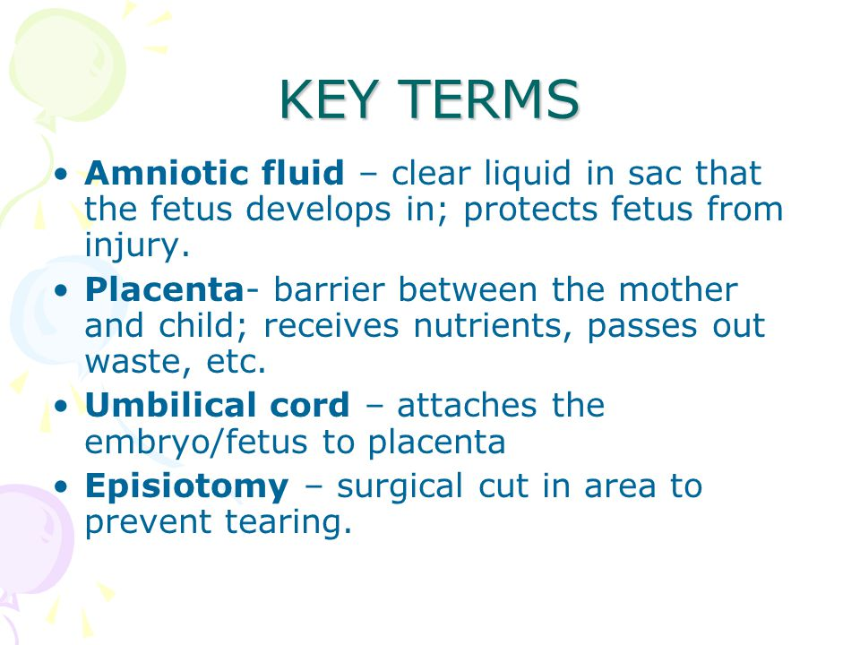 KEY TERMS Amniotic fluid – clear liquid in sac that the fetus develops in; protects fetus from injury.