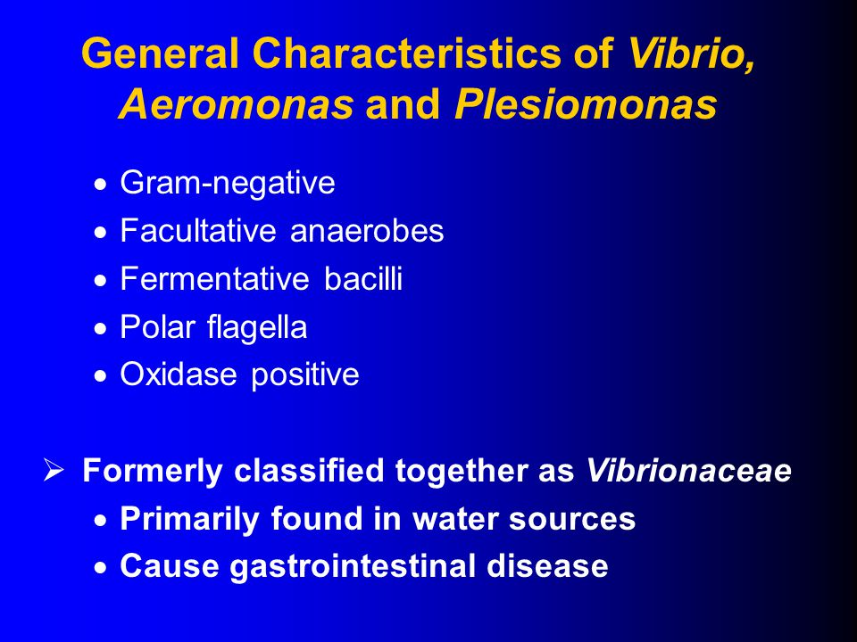  Gram-negative  Facultative anaerobes  Fermentative bacilli  Polar flagella  Oxidase positive  Formerly classified together as Vibrionaceae  Primarily found in water sources  Cause gastrointestinal disease General Characteristics of Vibrio, Aeromonas and Plesiomonas