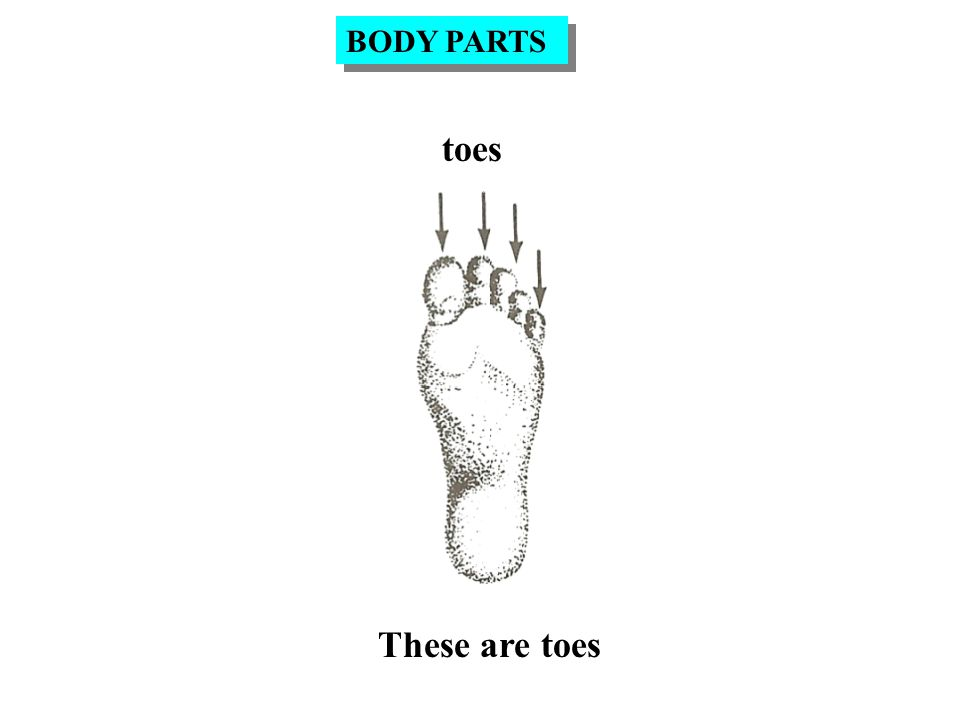 toes These are toes BODY PARTS