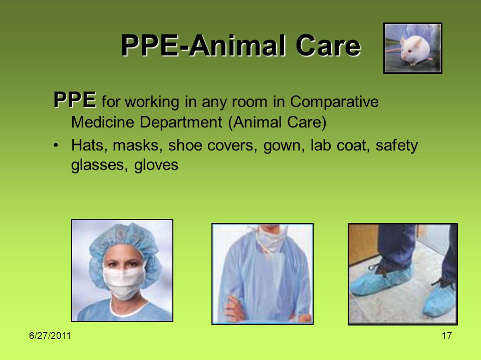 6/27/ PPE-Animal Care PPE PPE for working in any room in Comparative Medicine Department (Animal Care) Hats, masks, shoe covers, gown, lab coat, safety glasses, gloves