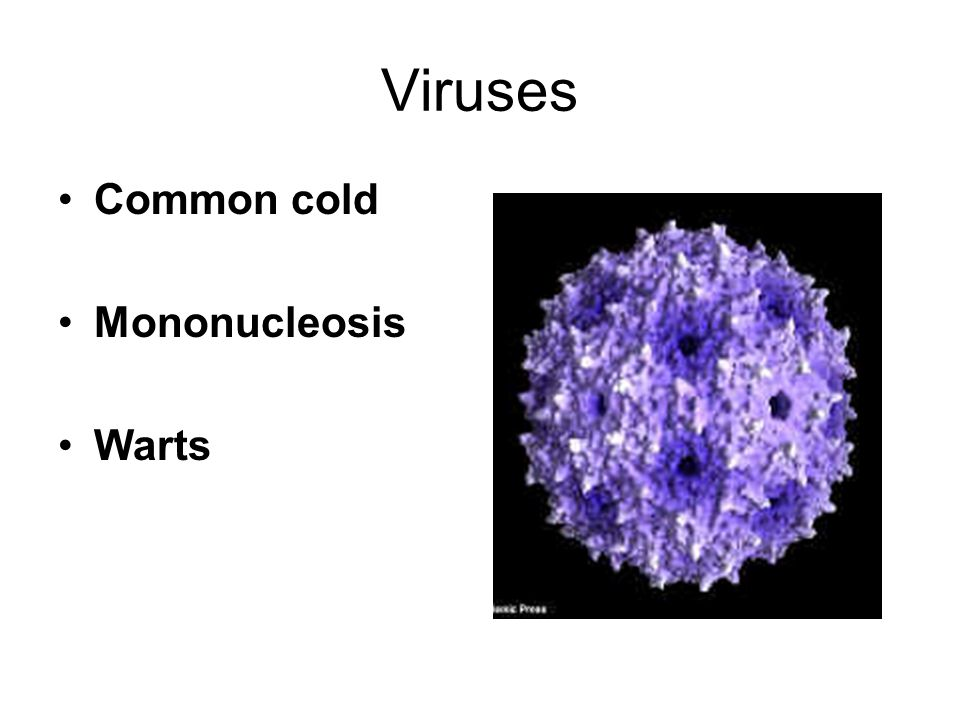 Viruses Common cold Mononucleosis Warts