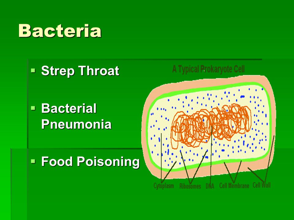 Bacteria  Strep Throat  Bacterial Pneumonia  Food Poisoning