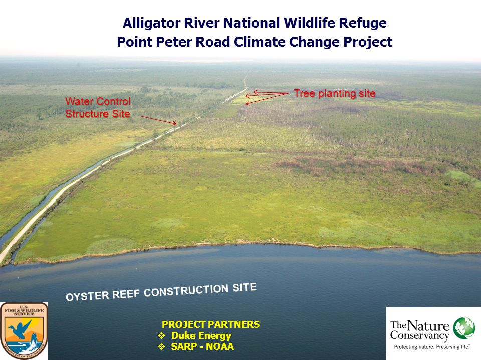 Alligator River National Wildlife Refuge Point Peter Road Climate Change Project OYSTER REEF CONSTRUCTION SITE Water Control Structure Site Tree planting site PROJECT PARTNERS  Duke Energy  SARP - NOAA