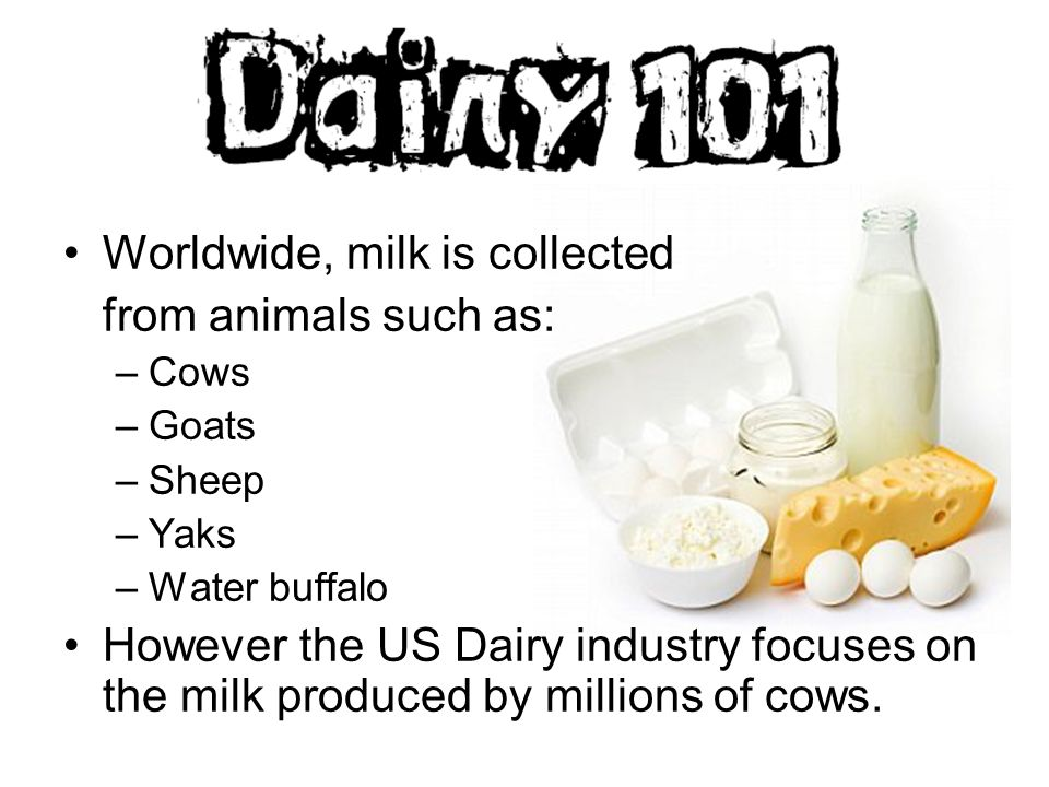 Worldwide, milk is collected from animals such as: –Cows –Goats
