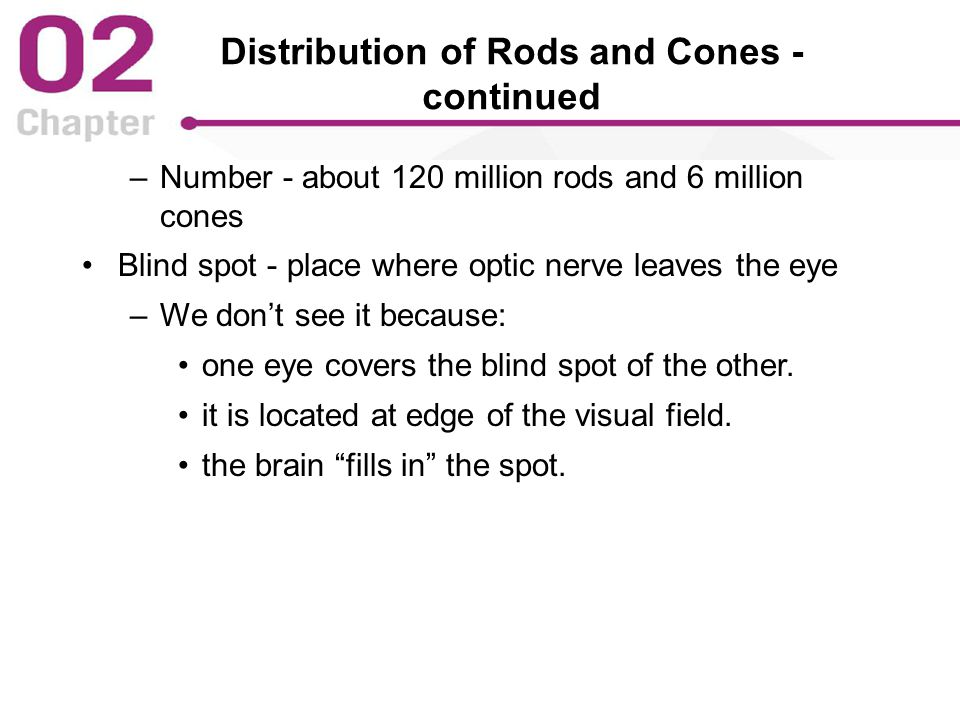 Distribution of Rods and Cones - continued –Number - about 120 million rods and 6 million cones Blind spot - place where optic nerve leaves the eye –We don't see it because: one eye covers the blind spot of the other.