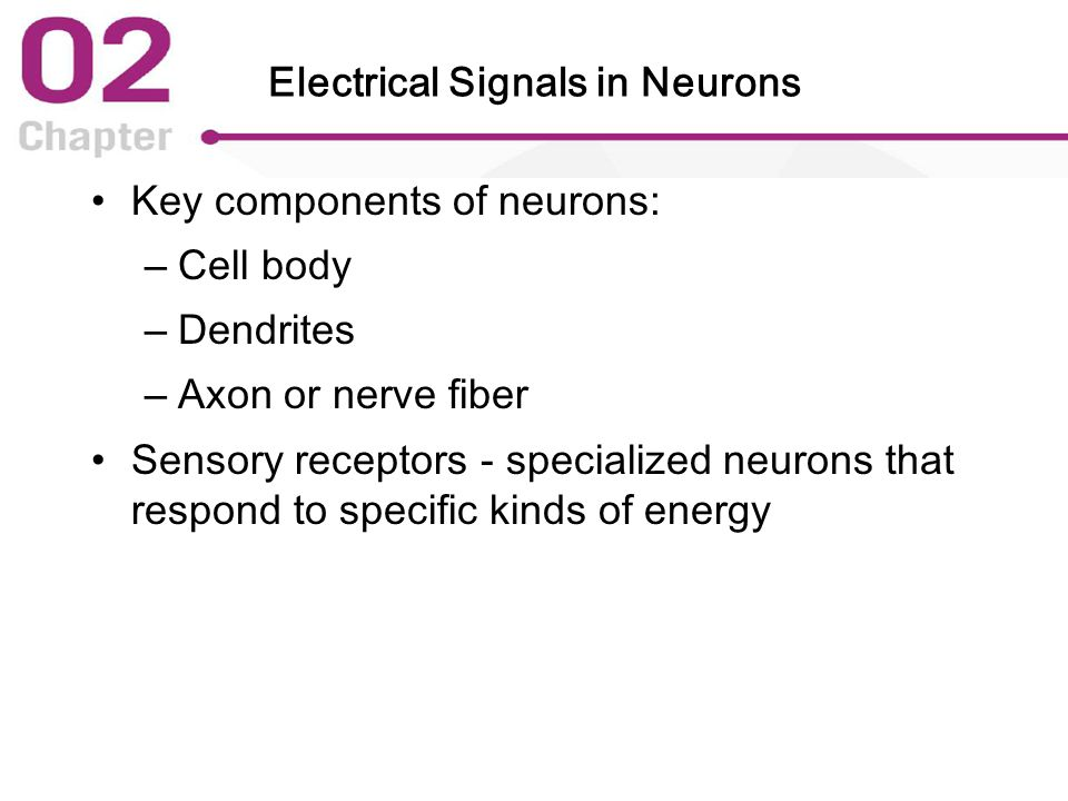 Electrical Signals in Neurons Key components of neurons: – Cell body – Dendrites – Axon or nerve fiber Sensory receptors - specialized neurons that respond to specific kinds of energy