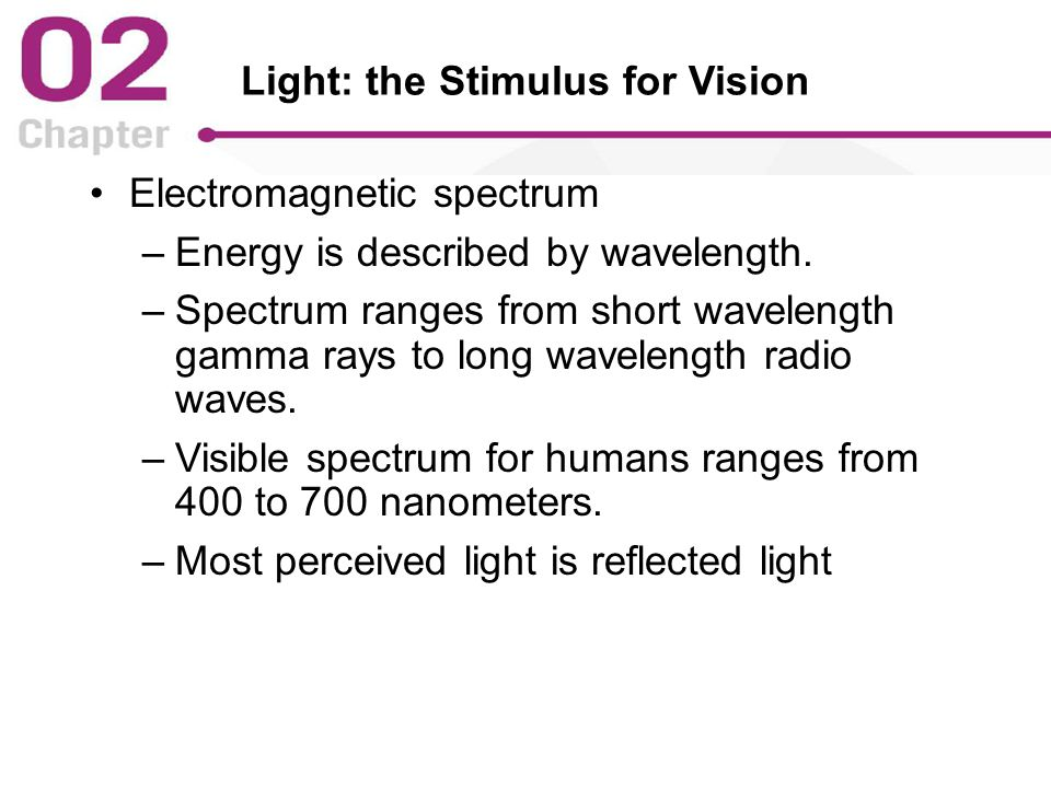 Light: the Stimulus for Vision Electromagnetic spectrum –Energy is described by wavelength.