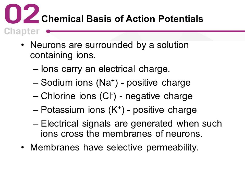 Chemical Basis of Action Potentials Neurons are surrounded by a solution containing ions.