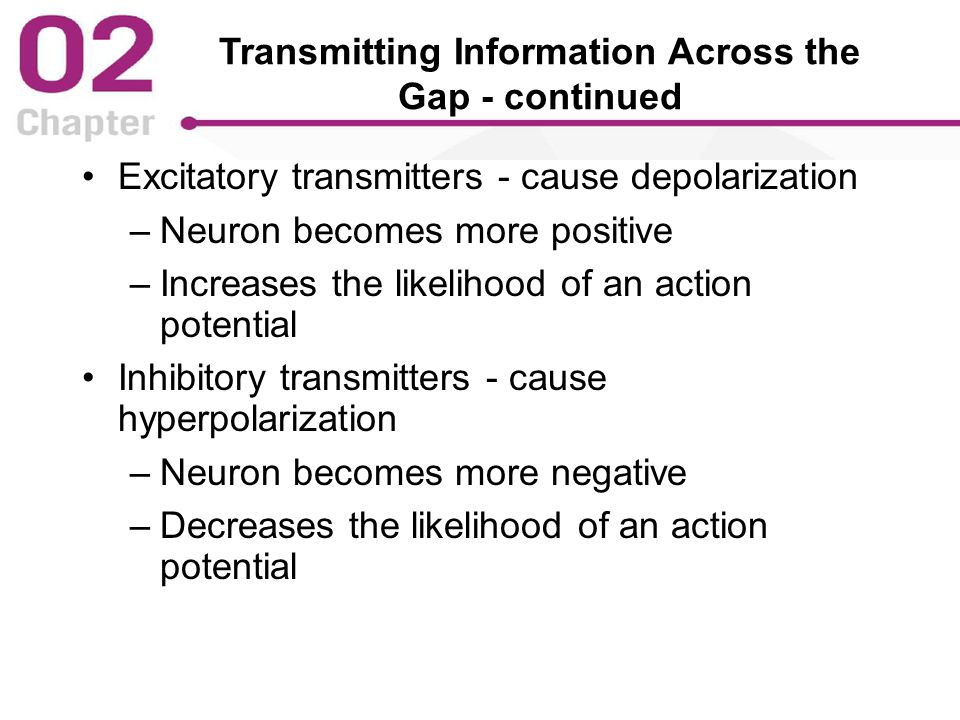 Transmitting Information Across the Gap - continued Excitatory transmitters - cause depolarization –Neuron becomes more positive –Increases the likelihood of an action potential Inhibitory transmitters - cause hyperpolarization –Neuron becomes more negative –Decreases the likelihood of an action potential