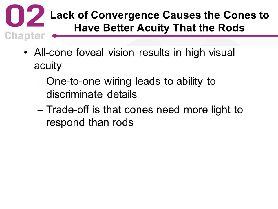 Lack of Convergence Causes the Cones to Have Better Acuity That the Rods All-cone foveal vision results in high visual acuity –One-to-one wiring leads to ability to discriminate details –Trade-off is that cones need more light to respond than rods