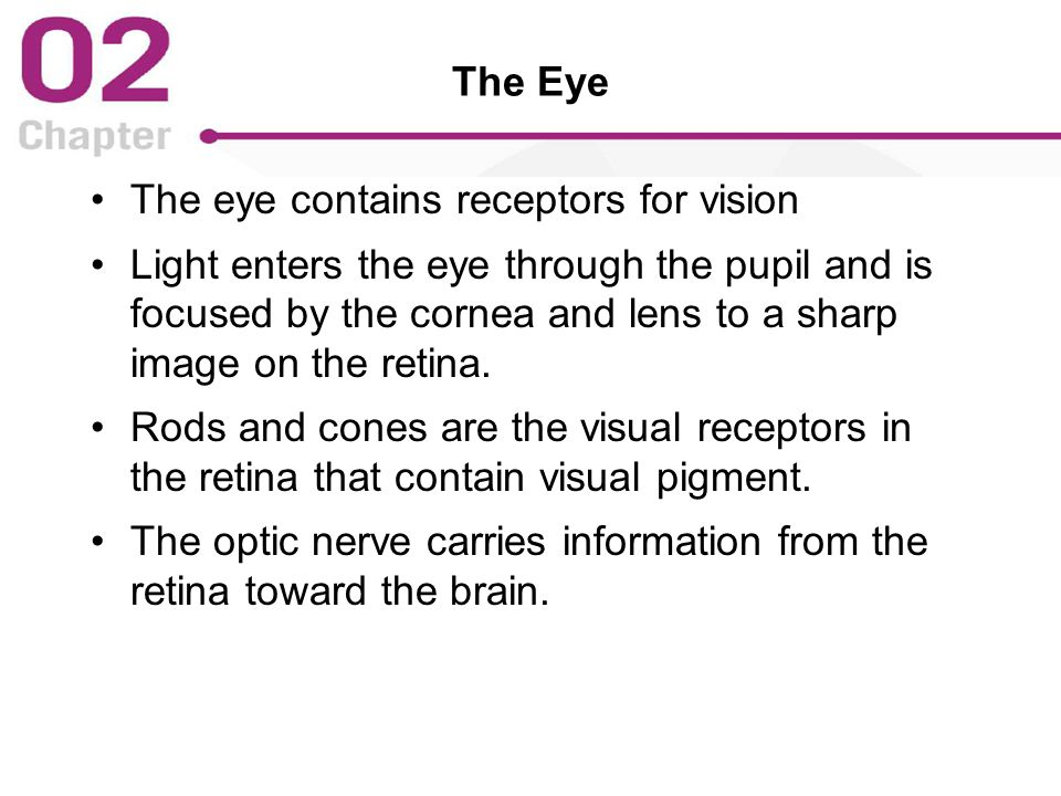 The Eye The eye contains receptors for vision Light enters the eye through the pupil and is focused by the cornea and lens to a sharp image on the retina.